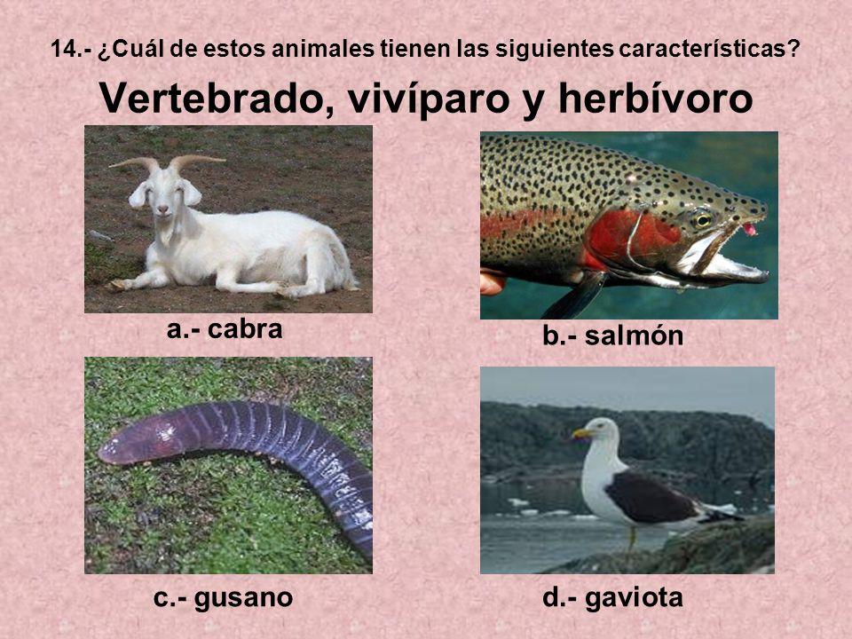 a.- cabra b.- salmón c.- gusano d.- gaviota