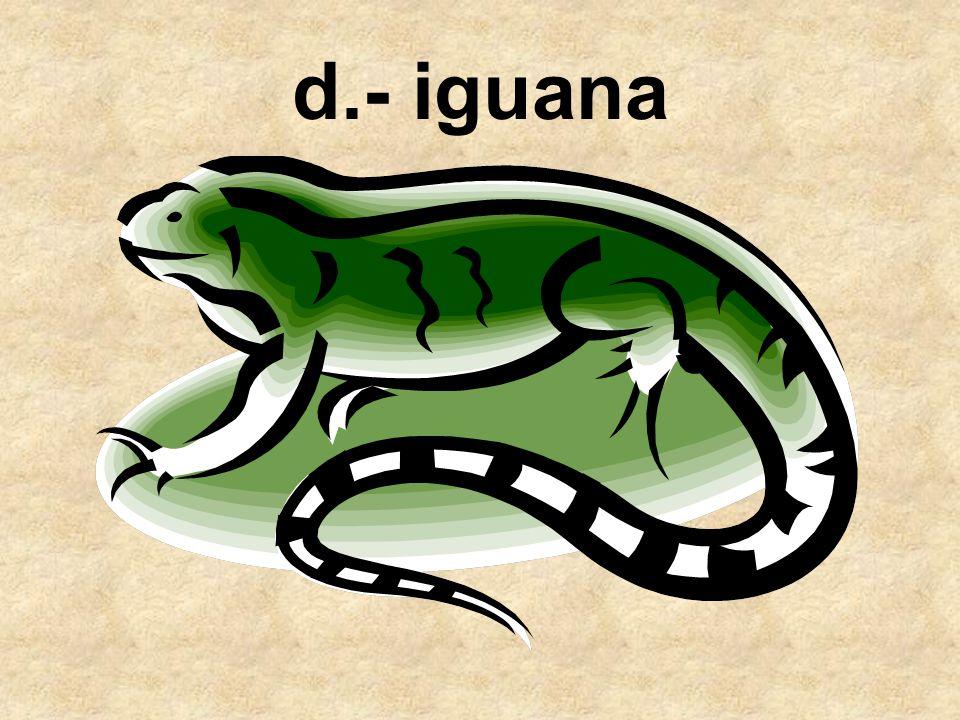 d.- iguana