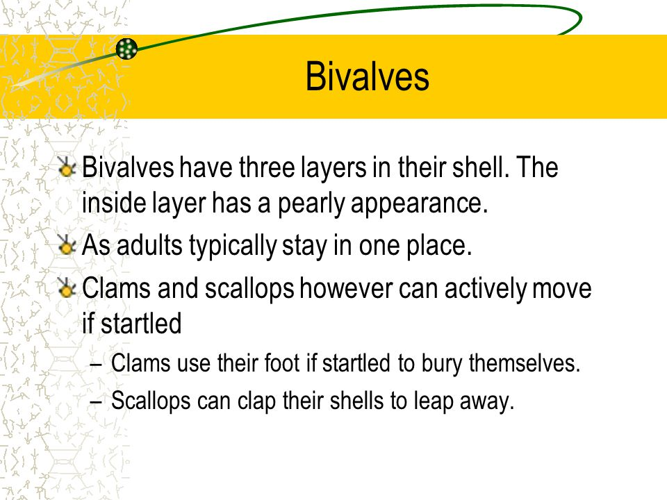 Bivalves Bivalves have three layers in their shell. The inside layer has a pearly appearance. As adults typically stay in one place.
