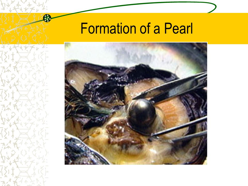 Formation of a Pearl