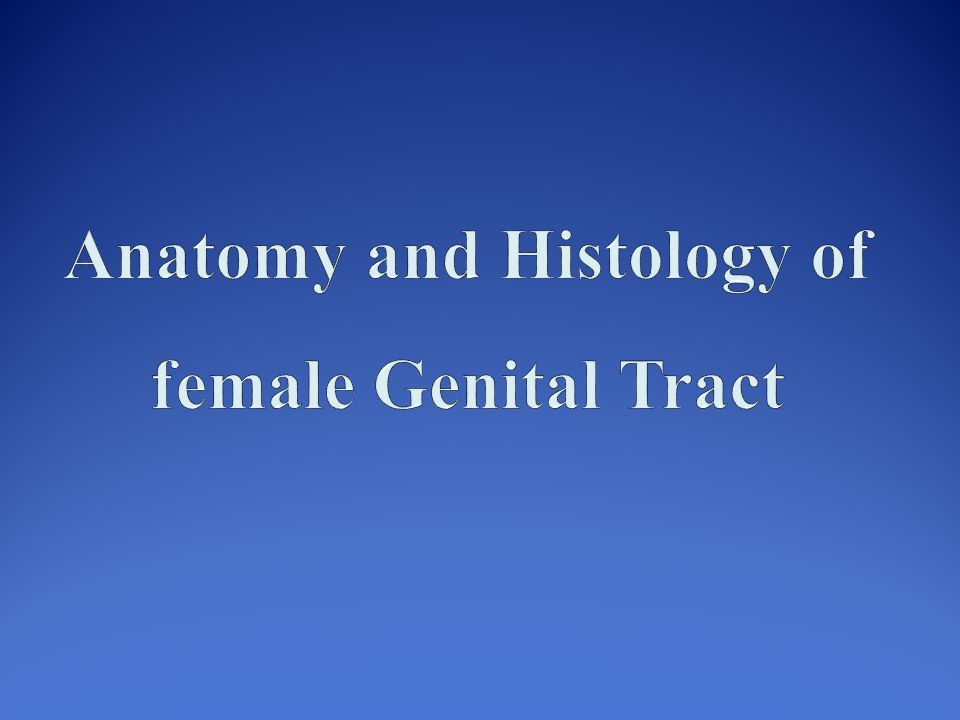 Anatomy and Histology of female Genital Tract