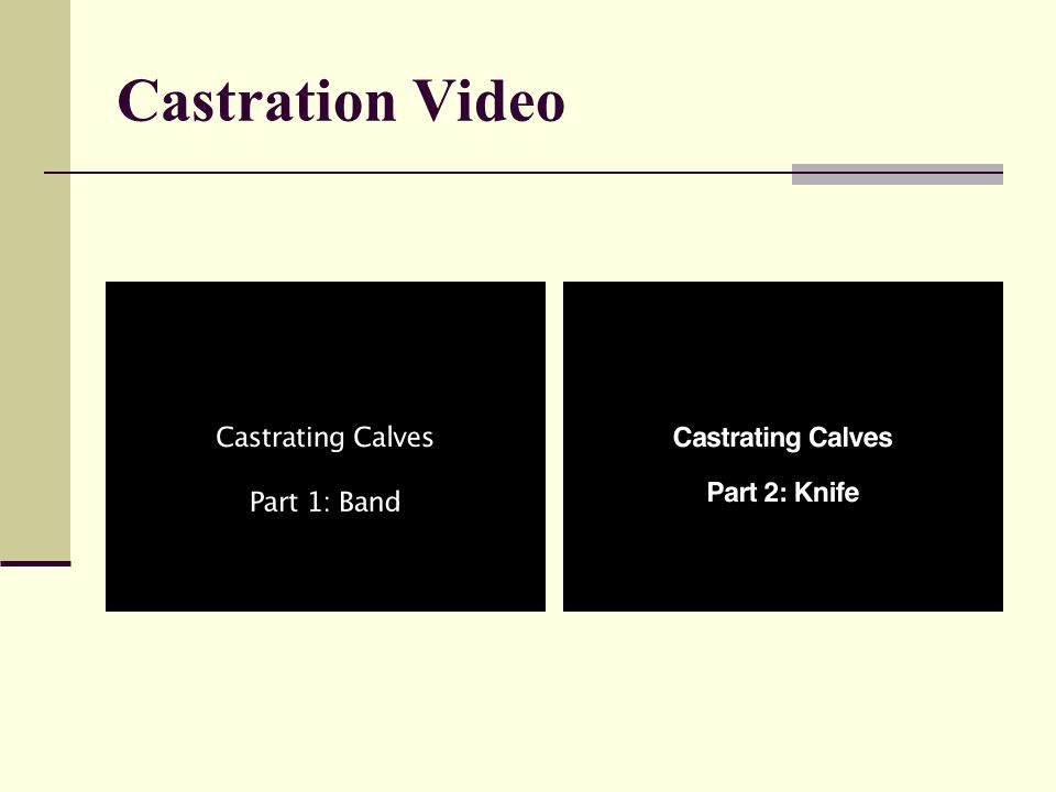 Castration Video