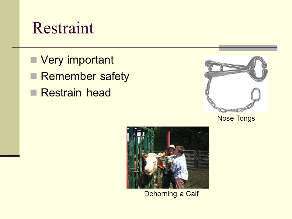 Restraint Very important Remember safety Restrain head Nose Tongs