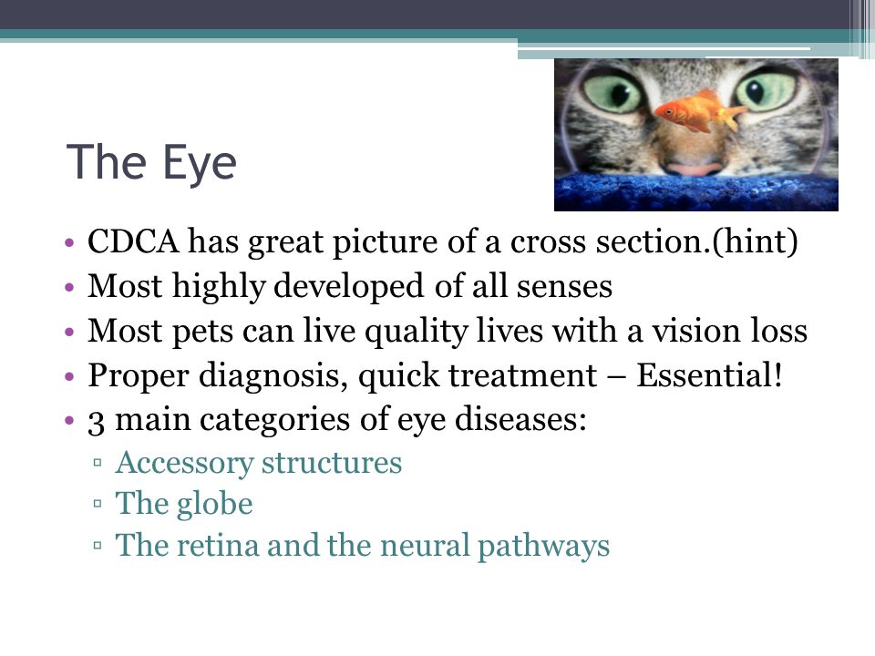 The Eye CDCA has great picture of a cross section.(hint)