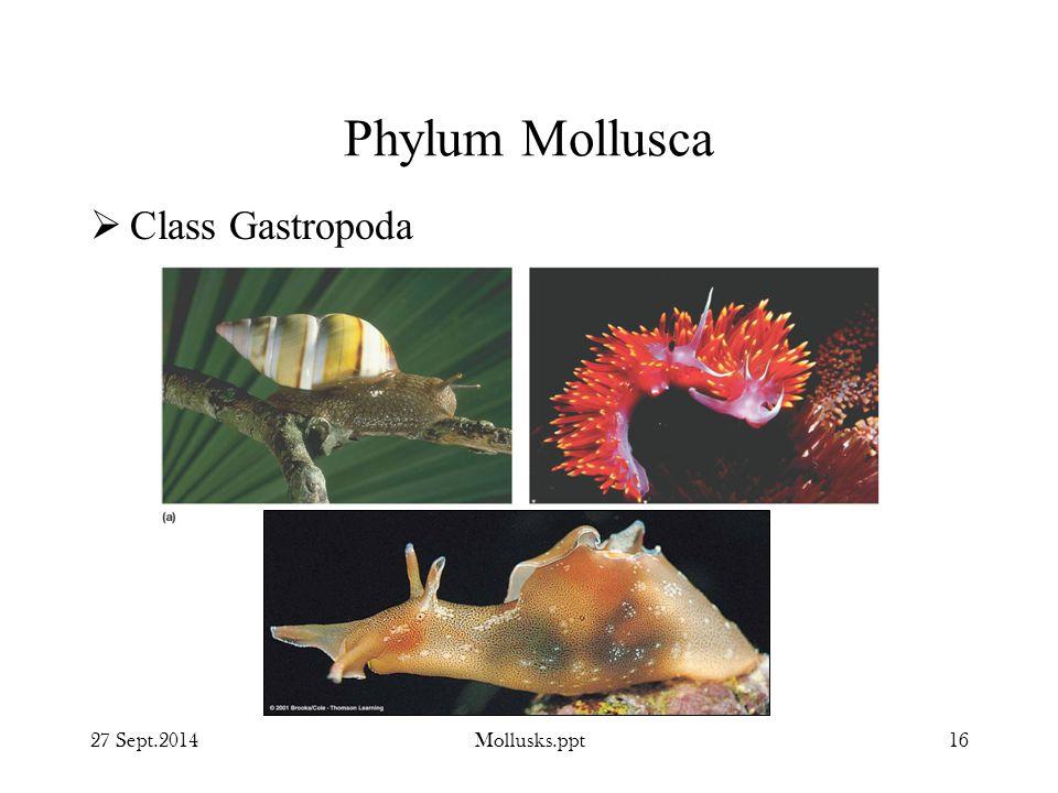 Phylum Mollusca Class Gastropoda 27 Sept.2014 Mollusks.ppt