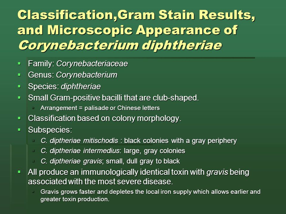 Classification,Gram Stain Results, and Microscopic Appearance of Corynebacterium diphtheriae