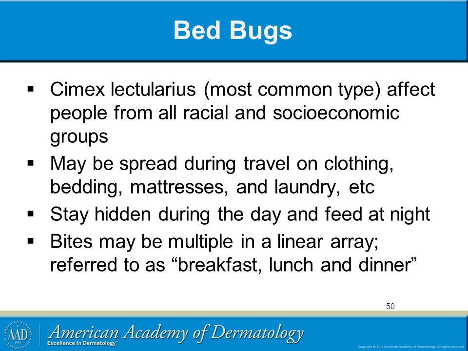 Bed Bugs Cimex lectularius (most common type) affect people from all racial and socioeconomic groups.