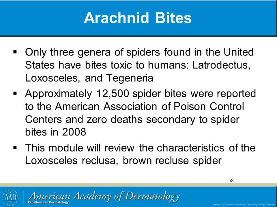 Arachnid Bites Only three genera of spiders found in the United States have bites toxic to humans: Latrodectus, Loxosceles, and Tegeneria.