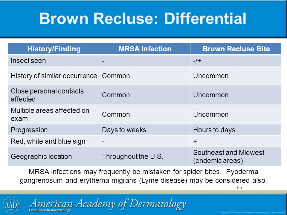 Brown Recluse: Differential