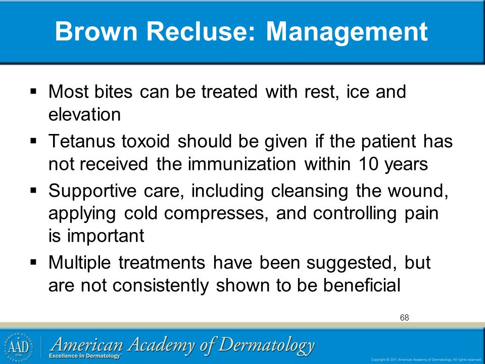 Brown Recluse: Management
