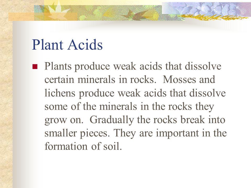 Plant Acids