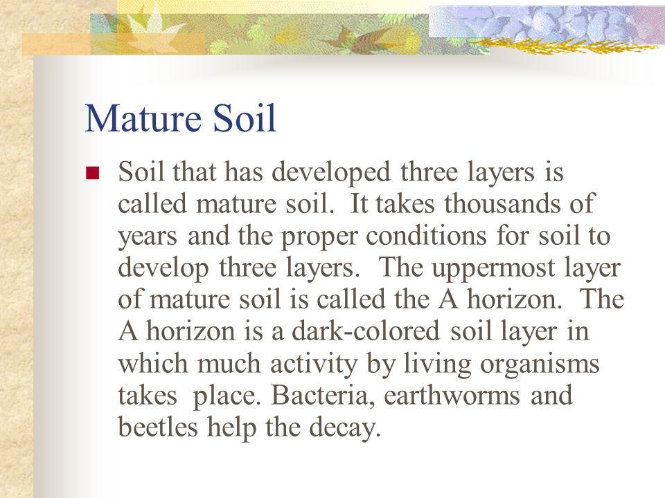 Mature Soil