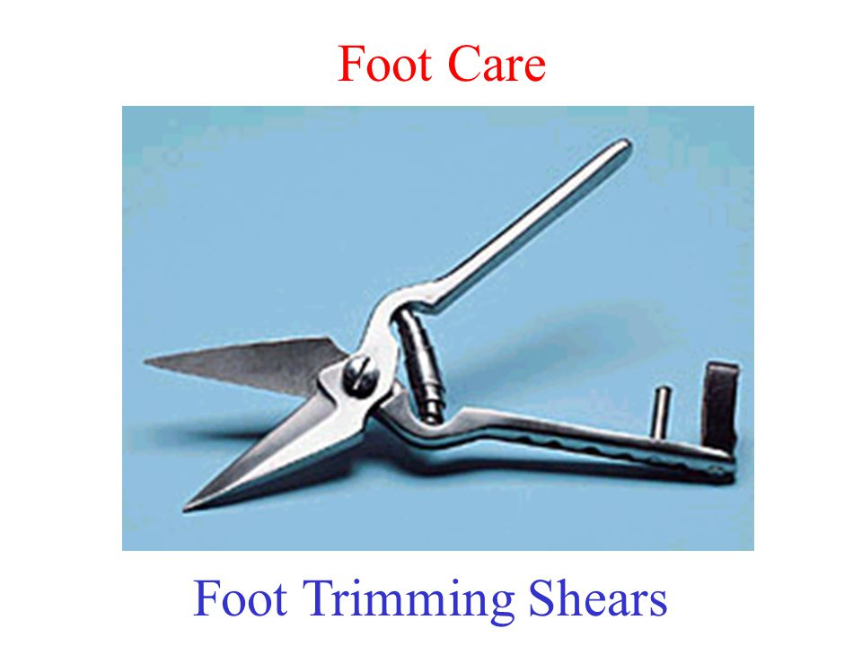 Foot Care Foot Trimming Shears