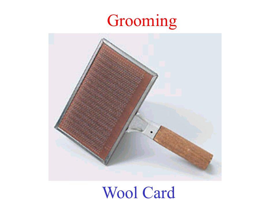 Grooming Wool Card