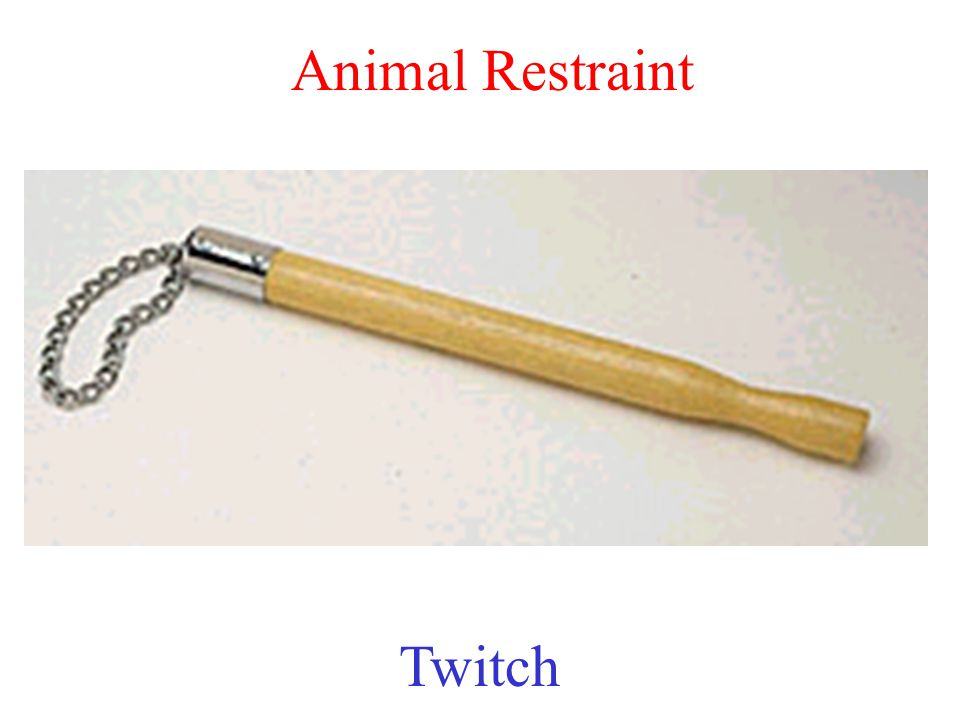 Animal Restraint Twitch