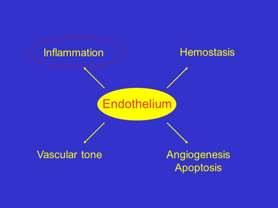 Endothelium Hemostasis Inflammation Vascular tone Angiogenesis