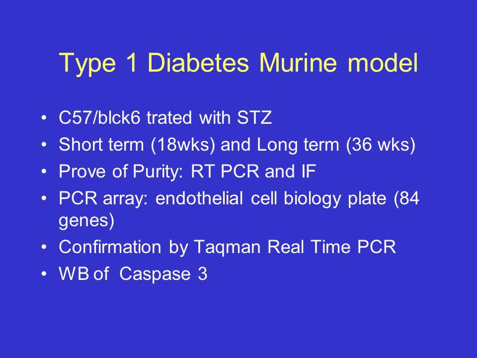 Type 1 Diabetes Murine model