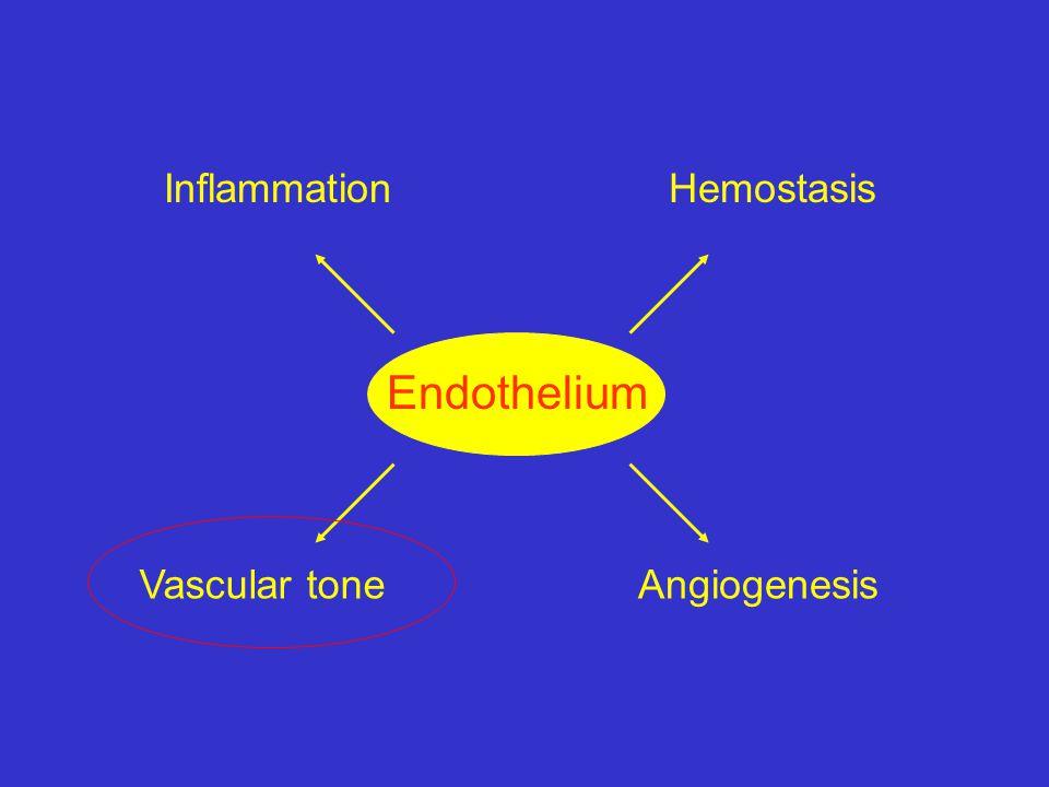 Hemostasis Inflammation Vascular tone Angiogenesis Endothelium