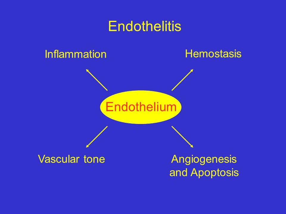 Endothelitis Endothelium Inflammation Hemostasis Vascular tone