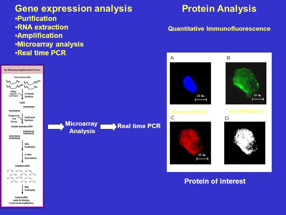 Protein Analysis Quantitative Immunofluorescence