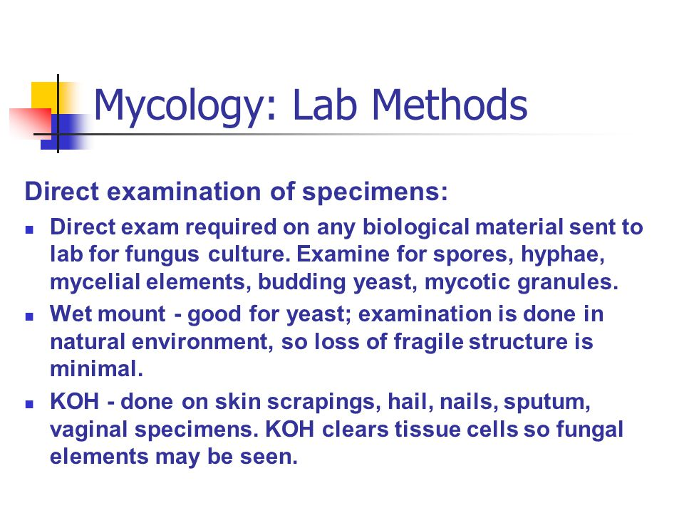 Mycology: Lab Methods Direct examination of specimens: