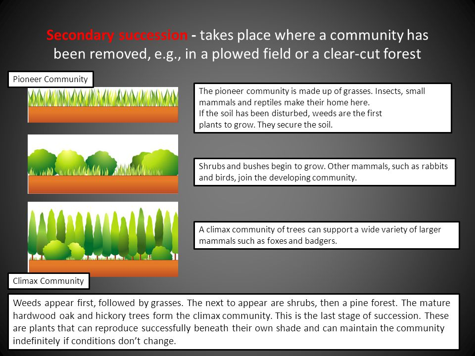 Secondary succession - takes place where a community has been removed, e.g., in a plowed field or a clear-cut forest