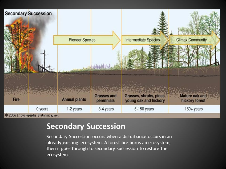 Secondary Succession Related Keywords Secondary