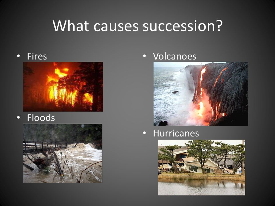 What causes succession