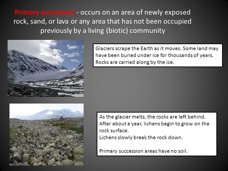 Primary succession - occurs on an area of newly exposed rock, sand, or lava or any area that has not been occupied previously by a living (biotic) community