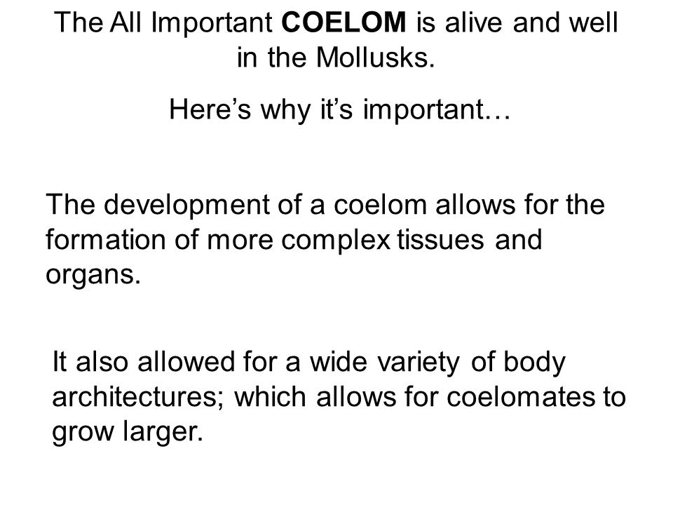 The All Important COELOM is alive and well in the Mollusks.