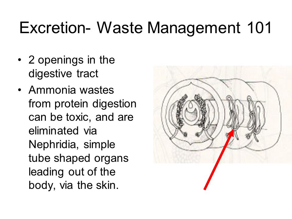 Excretion- Waste Management 101