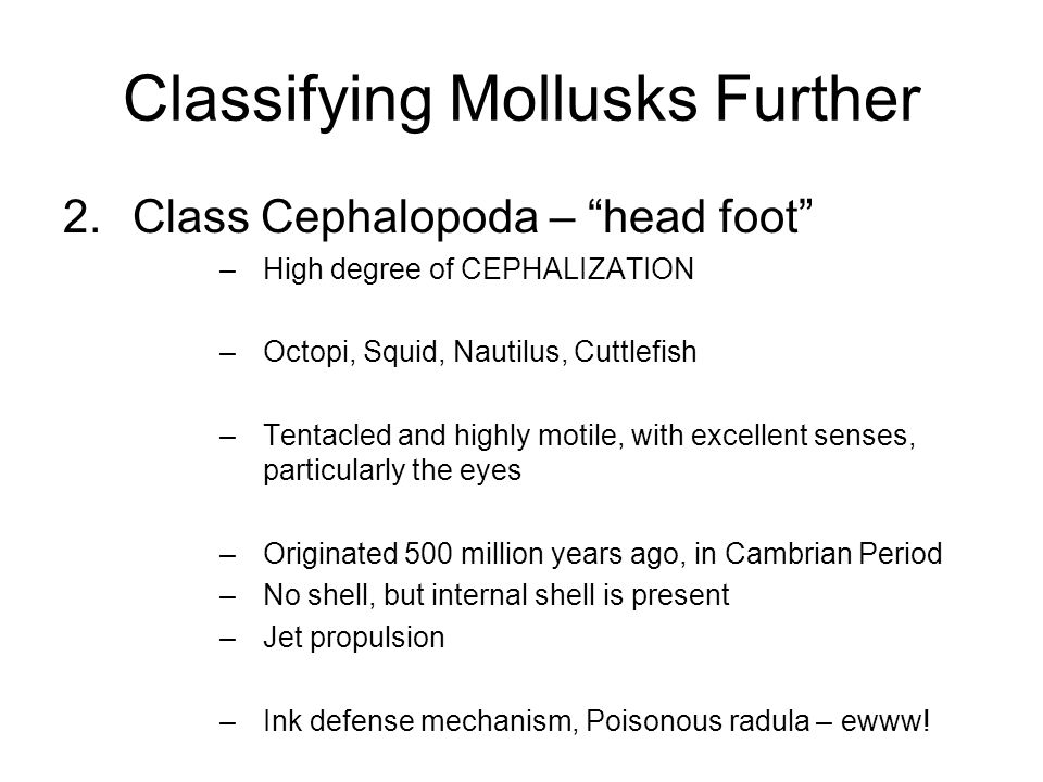 Classifying Mollusks Further