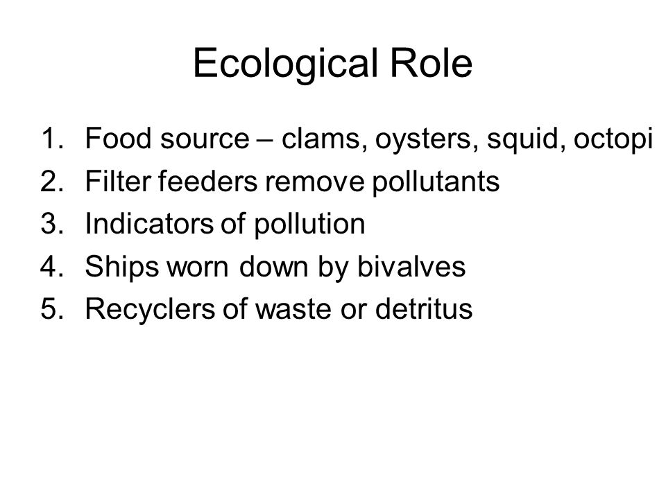 Ecological Role Food source – clams, oysters, squid, octopi