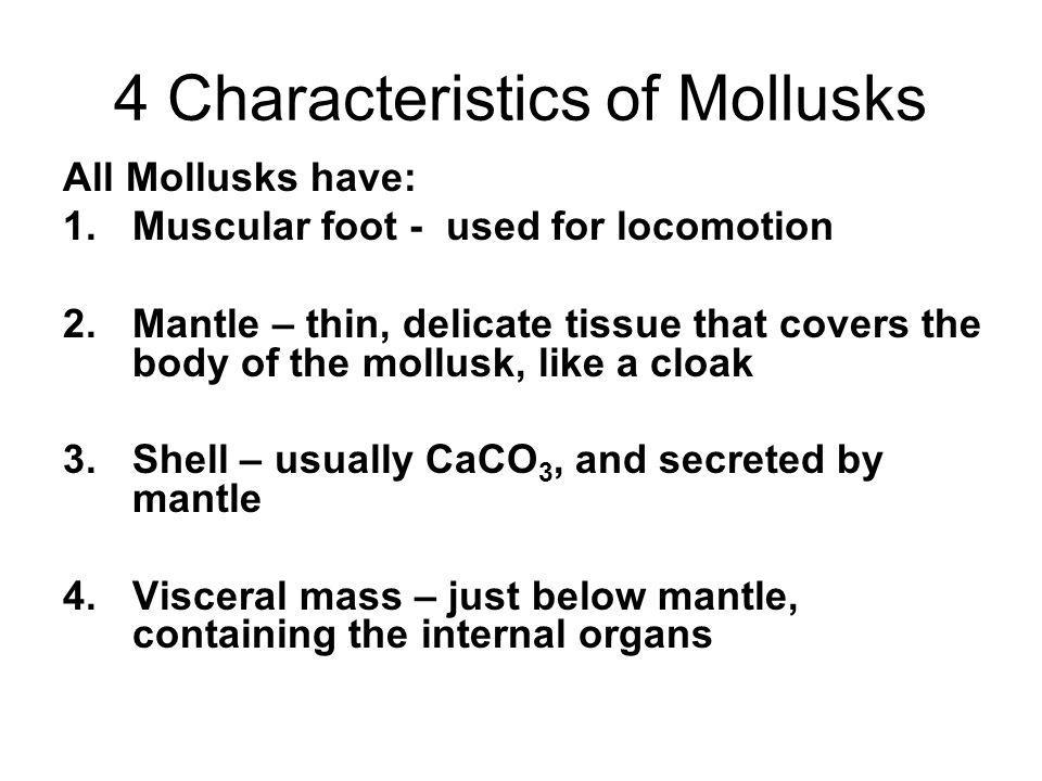 4 Characteristics of Mollusks