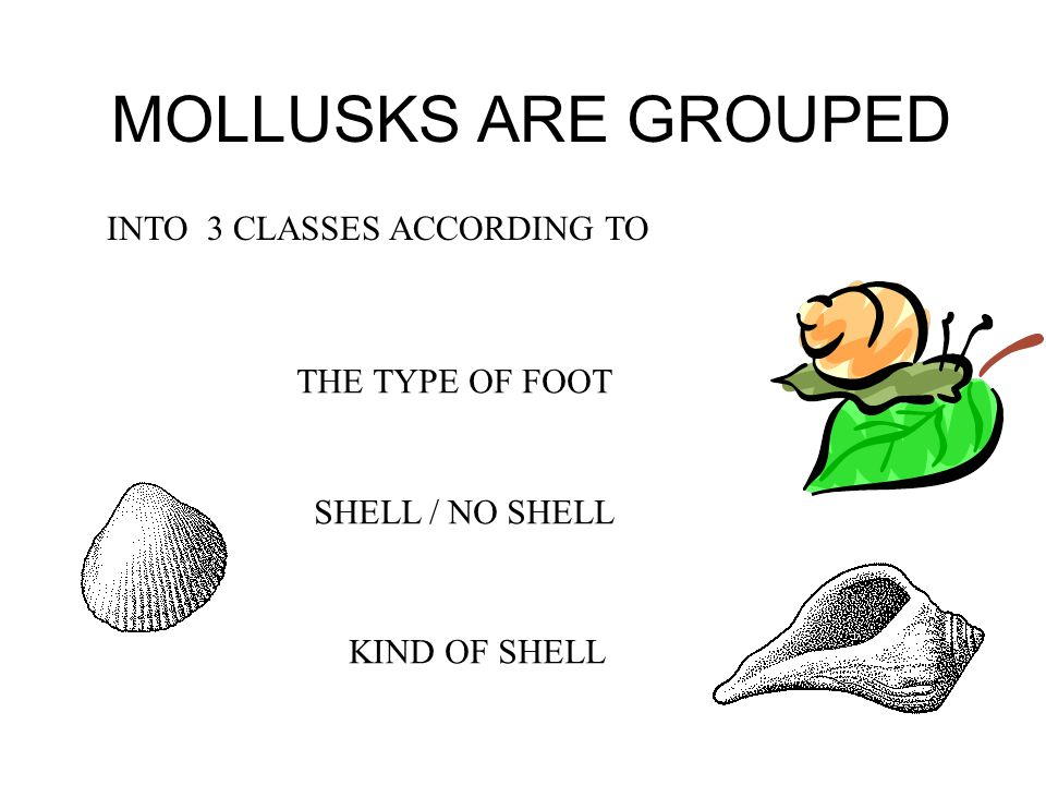 MOLLUSKS ARE GROUPED INTO 3 CLASSES ACCORDING TO THE TYPE OF FOOT