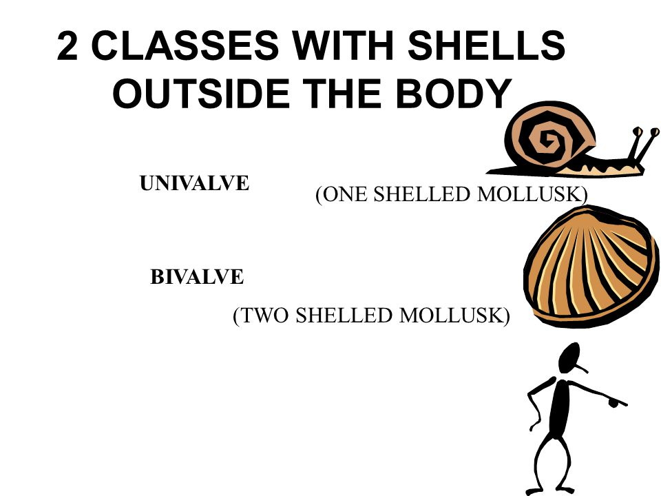 2 CLASSES WITH SHELLS OUTSIDE THE BODY
