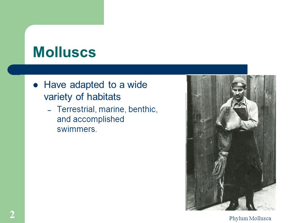 Molluscs Have adapted to a wide variety of habitats