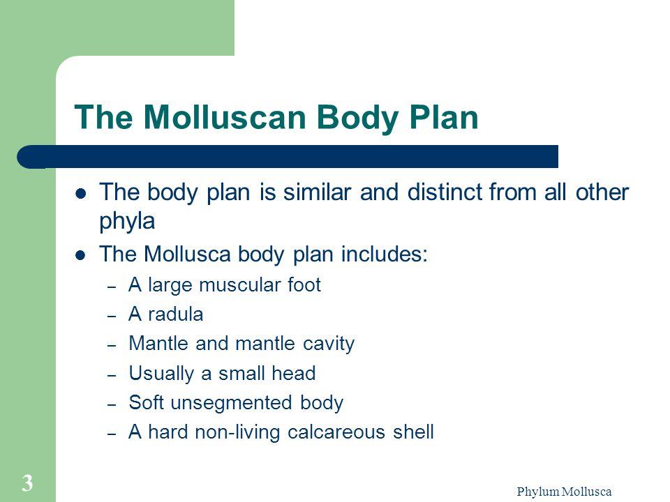 The Molluscan Body Plan