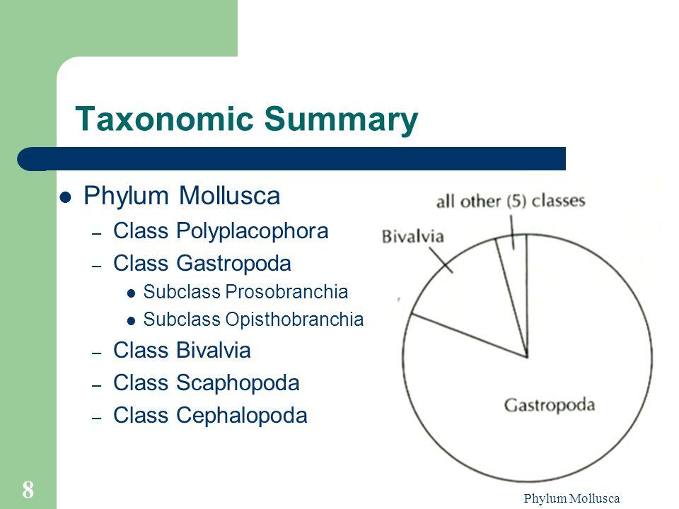 Taxonomic Summary Phylum Mollusca Class Polyplacophora