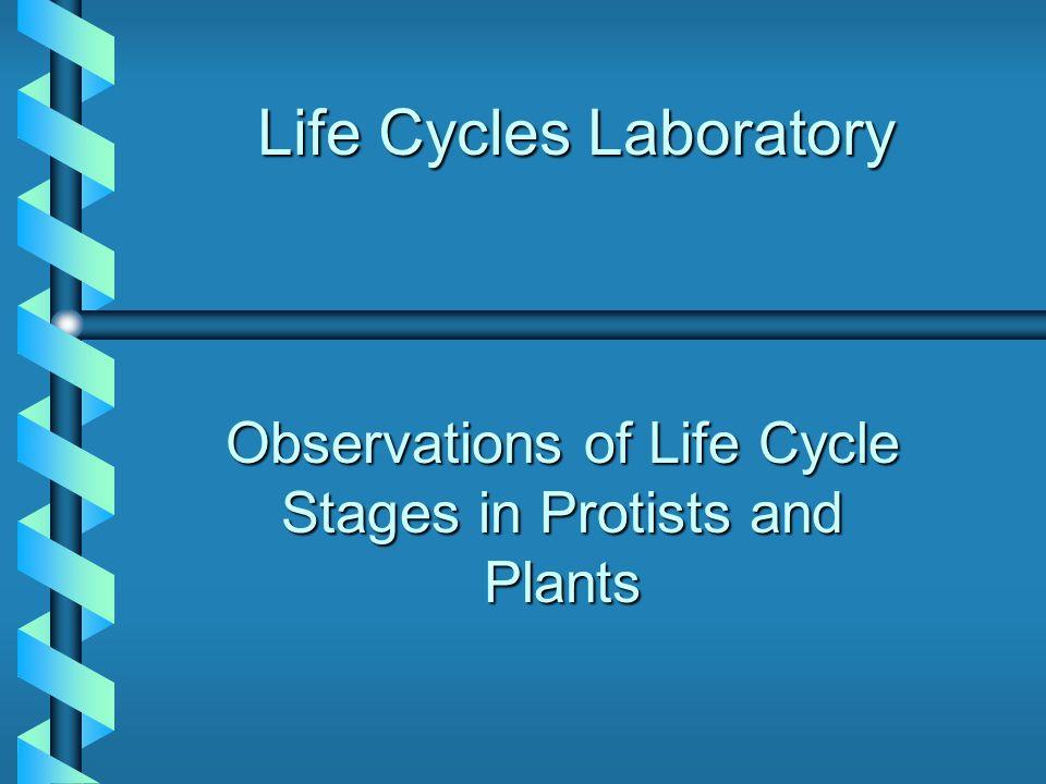 Life Cycles Laboratory