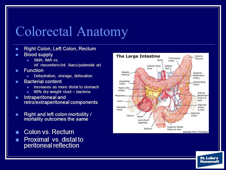 Colorectal Anatomy Colon vs. Rectum