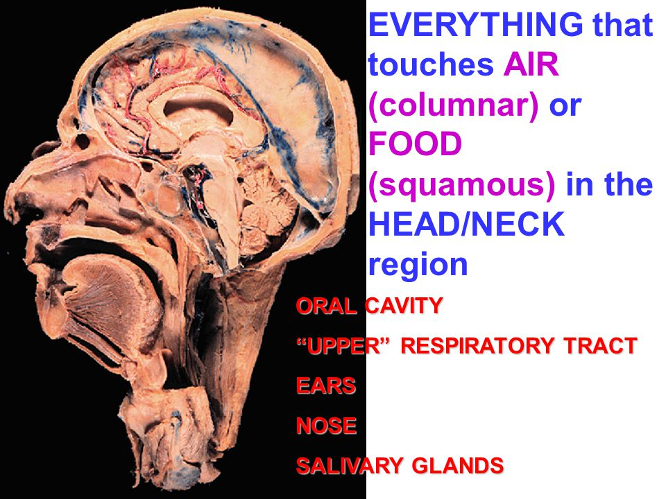 EVERYTHING that touches AIR (columnar) or FOOD (squamous) in the HEAD/NECK region
