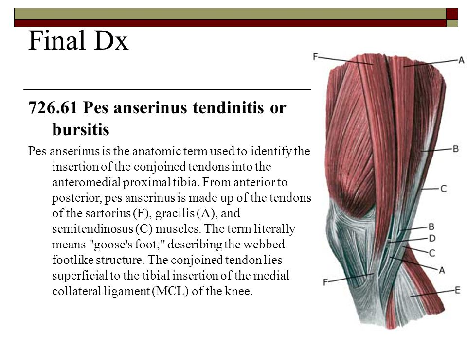 A Case Report Knee Pain. - ppt video online download