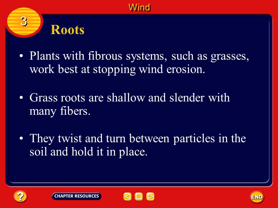 Wind 3. Roots. Plants with fibrous systems, such as grasses, work best at stopping wind erosion.