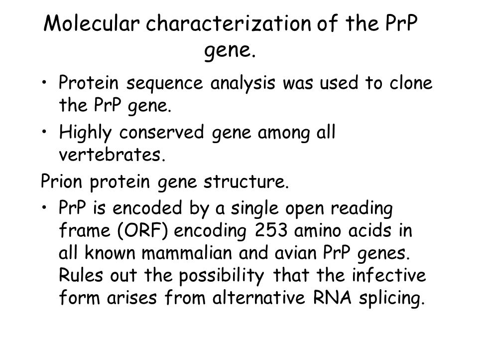 Molecular characterization of the PrP gene.