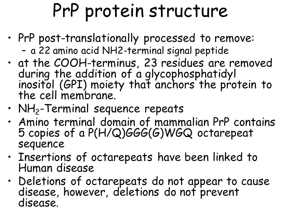 PrP protein structure PrP post-translationally processed to remove: