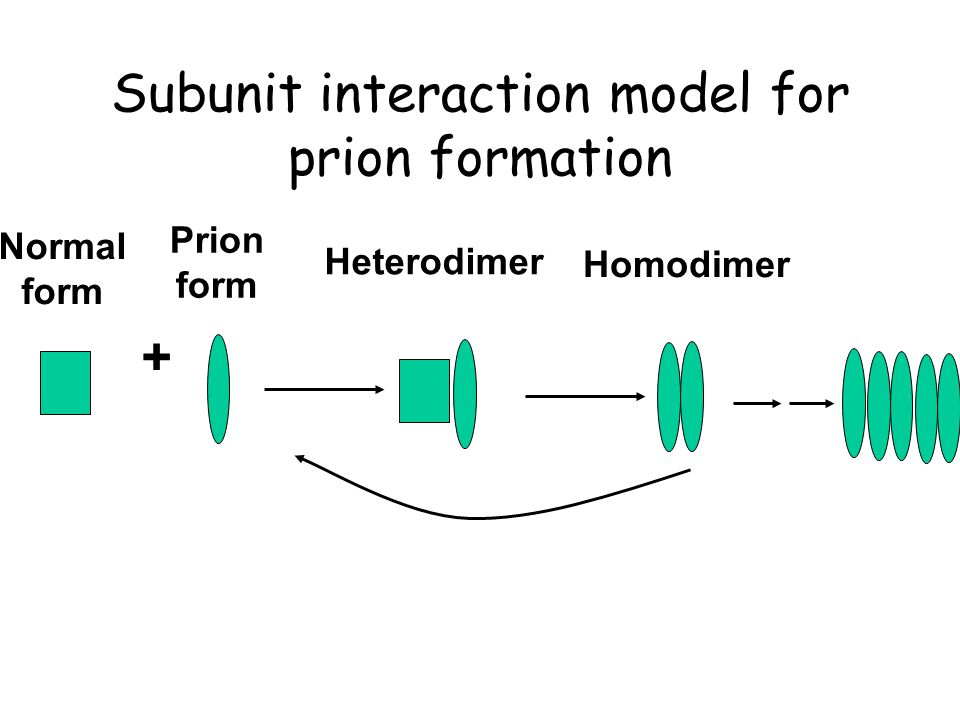 Subunit interaction model for prion formation