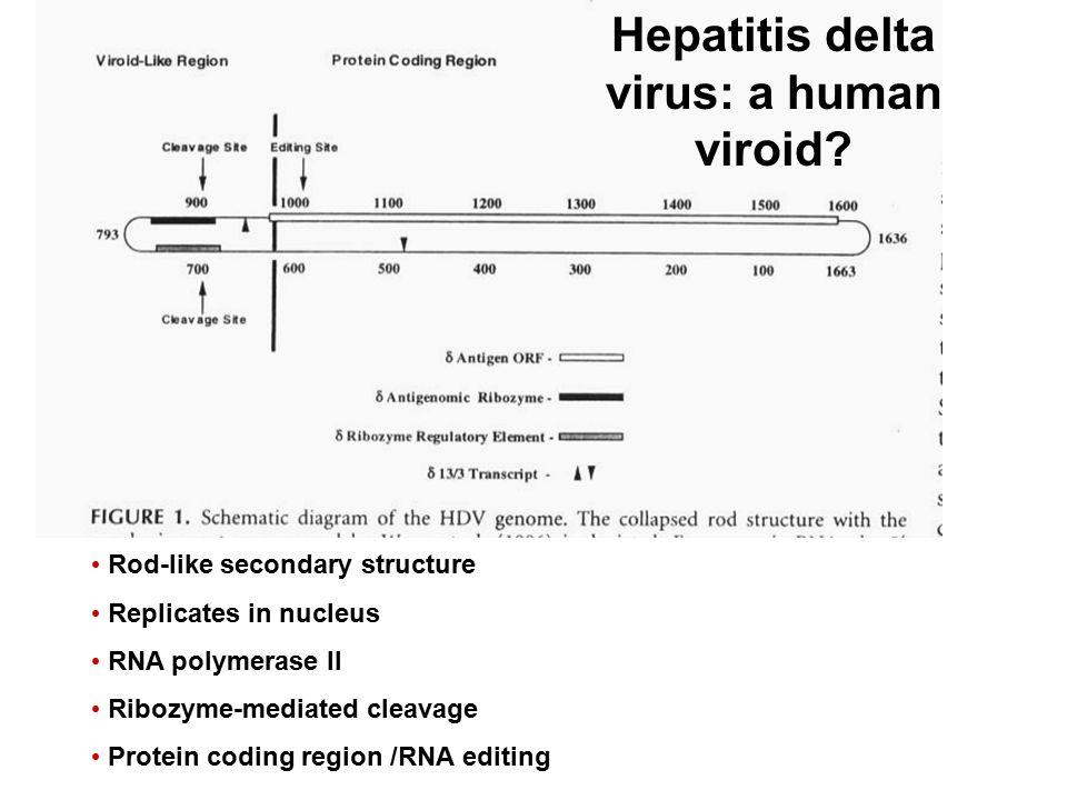Hepatitis delta virus: a human viroid