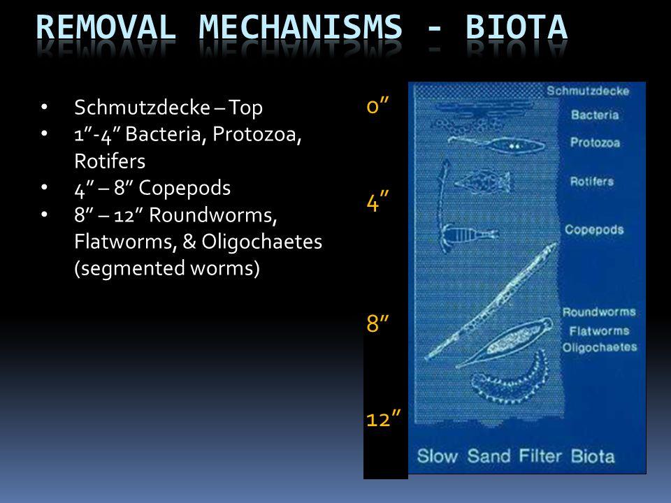 Removal Mechanisms - Biota