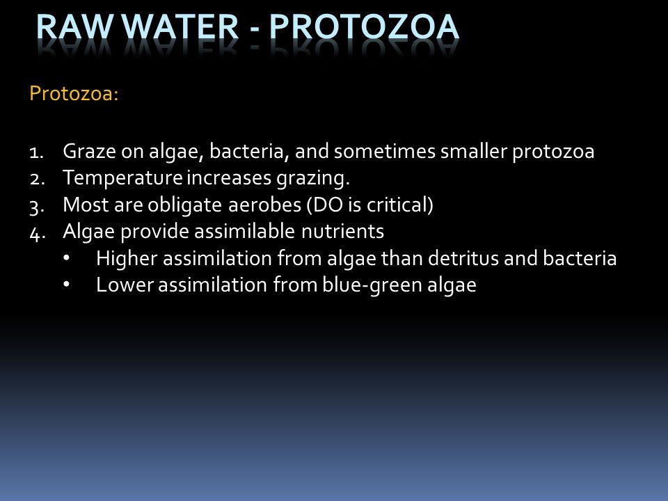 Raw Water - Protozoa Protozoa: